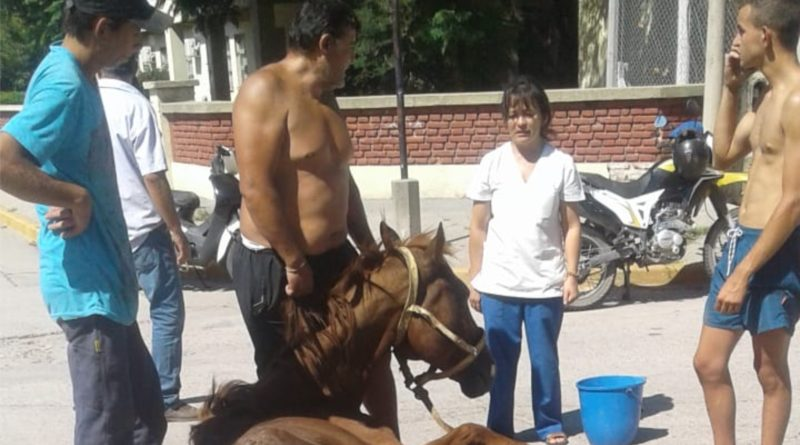 Rescataron un equino que en estado de deterioro había caído en la vía pública