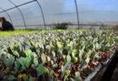 La Plantinera Municipal de Río cuarto produjo más de 32 mil plantines